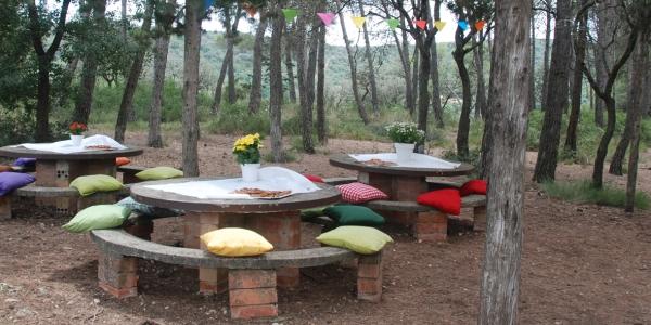 picnic x desdelsofa